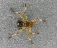 уничтожение паразитов вредителей насекомых фирмы
